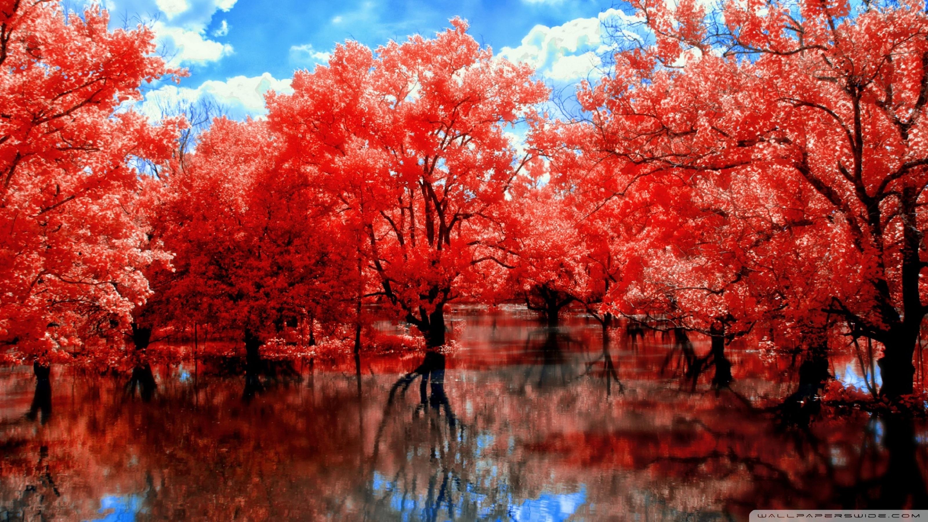 красные деревья  № 1276274 загрузить