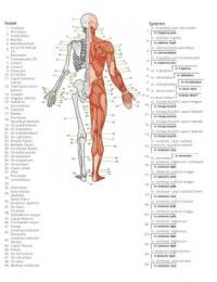 Verwonderlijk Botten en spieren menselijk lichaam - Bewegingsanalyse - Stuvia XW-73